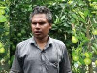 বরিশালে মাল্টা চাষে ফিরল সুদিন গুরুদাস ব্যানার্জী'র