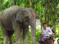 স্ত্রীর 'স্বপ্ন' পূরণ করতে হাতি কিনলেন কৃষক