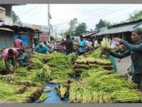 জয়পুরহাটে কচুর লতি চাষ : ভাগ্য বদলাচ্ছে কৃষকদের