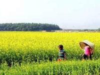 পিরোজপুরে রবিশস্য চাষিদের পুনর্বাসনে ১ কোটি টাকা বরাদ্দ